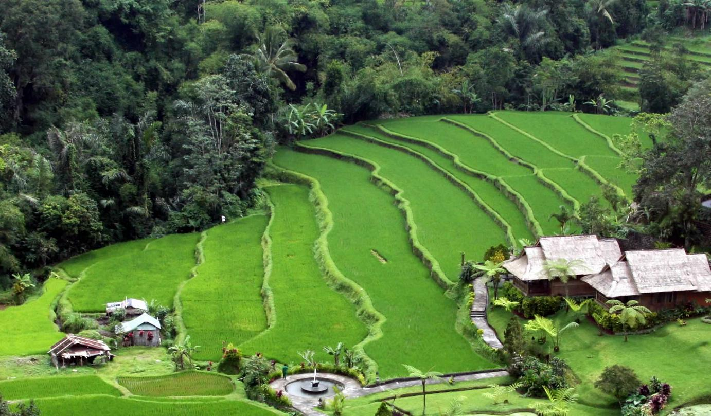 Padi field, rice terraces, Bali|Yvanne Teo
